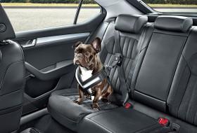 biztonsági öv, kutya, skoda