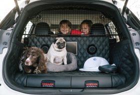 kutya, kutyabarát, nissan, x-trail, x-trail 4dogs