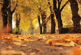 biztonság, ősz, szürkület, vezetés