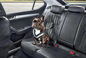 baleset, biztonság, kutya, kutyatartó, utazás